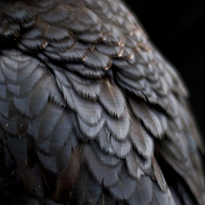 Ex People – Bird